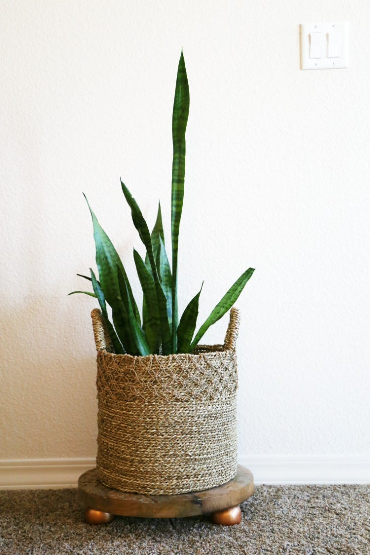 snake plant in a basket